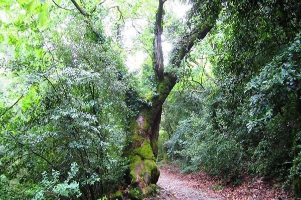 پوشش-گیاهی-پارک-ملی-دلتای-آیدین-کوش-آداسی