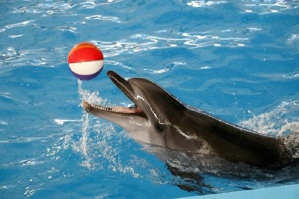پارک-دلفین-در-تور-مارماریس