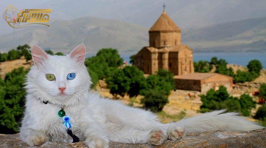 بازدید از خانه گربه ها در تور وان